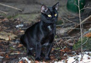 Do black cats make you anxious?