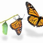 Like a caterpillar into a butterfly, we will change