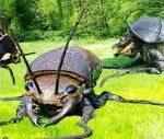 A big bug