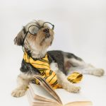 February Interesting Ideas & a funny puppy in eyeglasses with open book