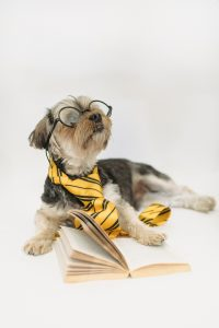 Funny puppy in eyeglasses with open book